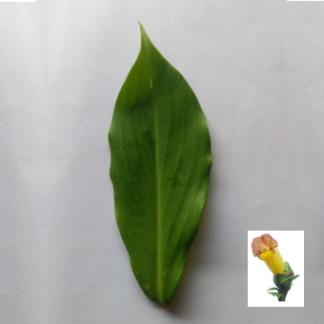 Insulin Leaf